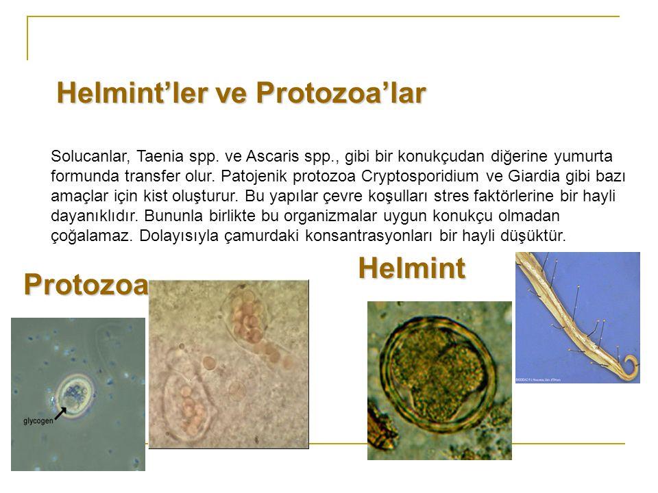 Helmint'ler ve Protozoa'lar
