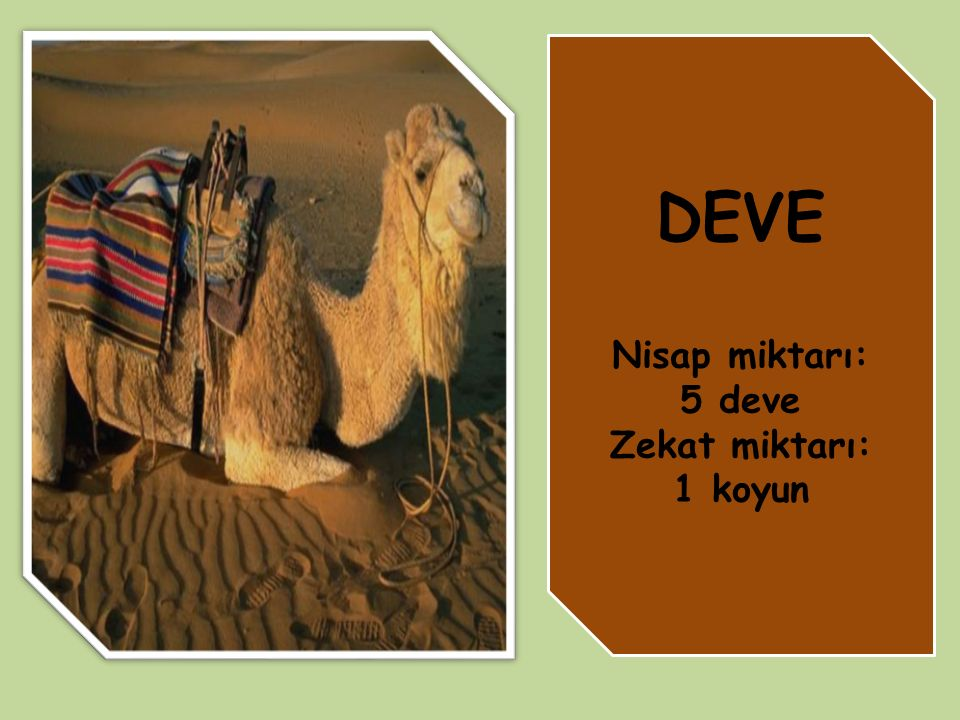 DEVE Nisap miktarı: 5 deve Zekat miktarı: 1 koyun