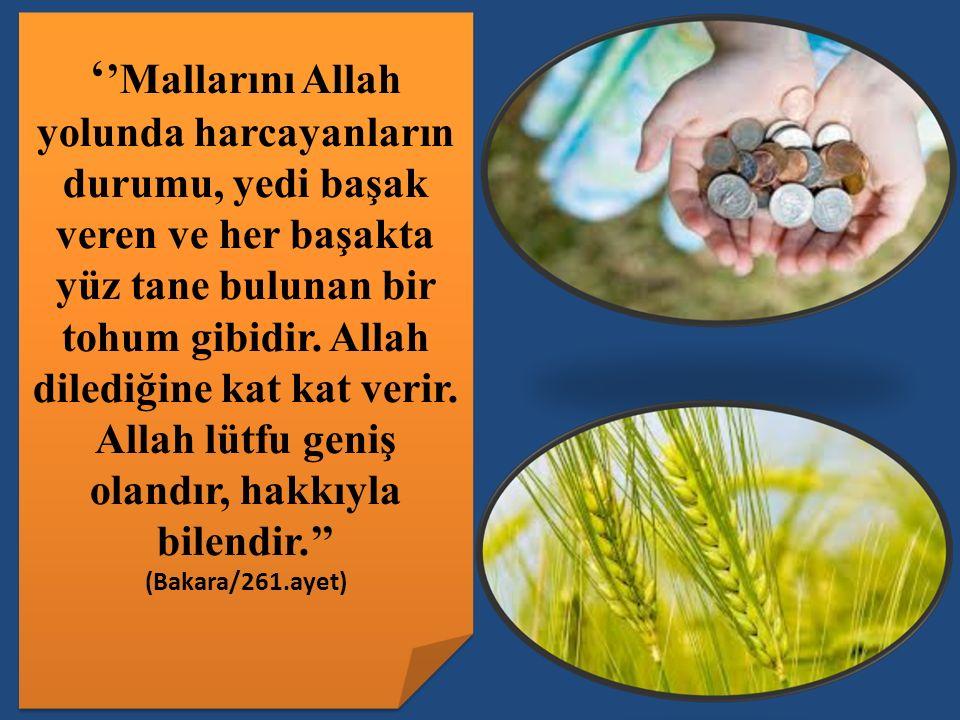 ''Mallarını Allah yolunda harcayanların durumu, yedi başak veren ve her başakta yüz tane bulunan bir tohum gibidir. Allah dilediğine kat kat verir. Allah lütfu geniş olandır, hakkıyla bilendir.''