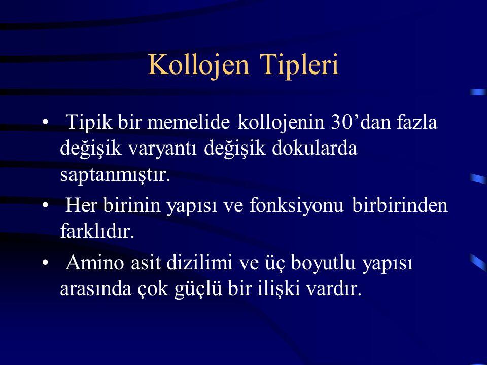 Kollojen Tipleri Tipik bir memelide kollojenin 30'dan fazla değişik varyantı değişik dokularda saptanmıştır.