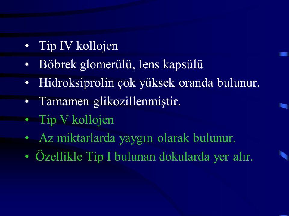 Tip IV kollojen Böbrek glomerülü, lens kapsülü. Hidroksiprolin çok yüksek oranda bulunur. Tamamen glikozillenmiştir.