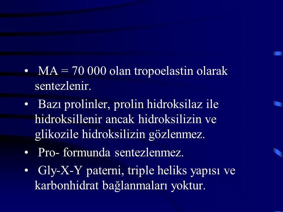 MA = 70 000 olan tropoelastin olarak sentezlenir.