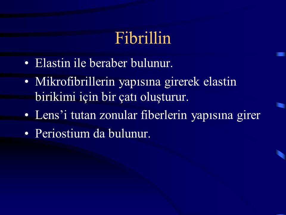 Fibrillin Elastin ile beraber bulunur.