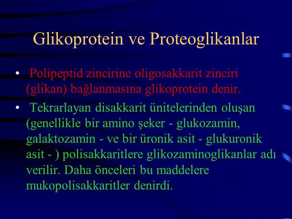 Glikoprotein ve Proteoglikanlar