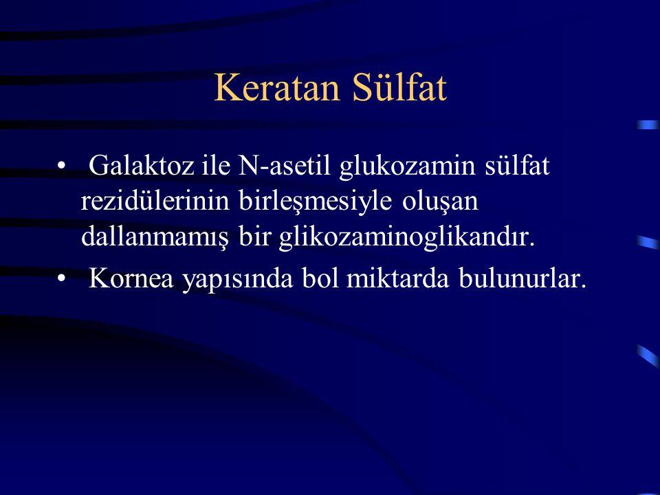 Keratan Sülfat Galaktoz ile N-asetil glukozamin sülfat rezidülerinin birleşmesiyle oluşan dallanmamış bir glikozaminoglikandır.