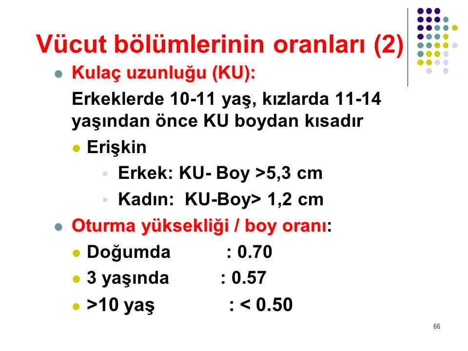 Vücut bölümlerinin oranları (2)