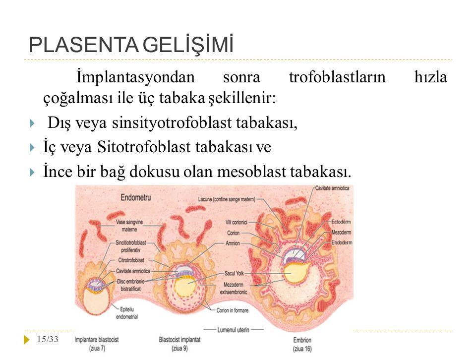 PLASENTA GELİŞİMİ İmplantasyondan sonra trofoblastların hızla çoğalması ile üç tabaka şekillenir: Dış veya sinsityotrofoblast tabakası,
