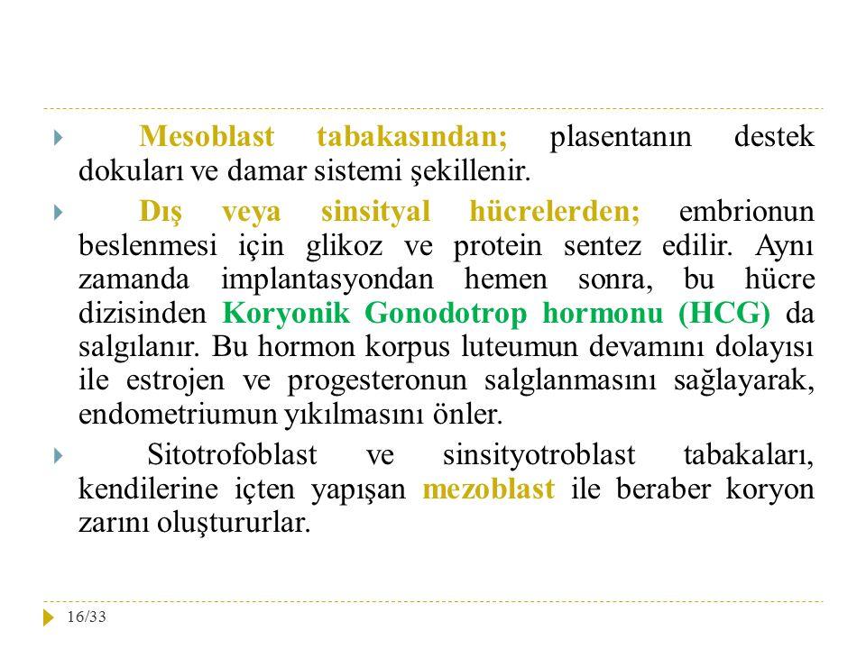Mesoblast tabakasından; plasentanın destek dokuları ve damar sistemi şekillenir.