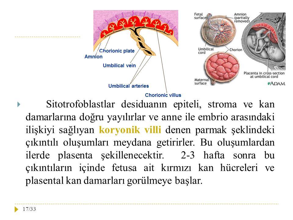 Sitotrofoblastlar desiduanın epiteli, stroma ve kan damarlarına doğru yayılırlar ve anne ile embrio arasındaki ilişkiyi sağlıyan koryonik villi denen parmak şeklindeki çıkıntılı oluşumları meydana getirirler.