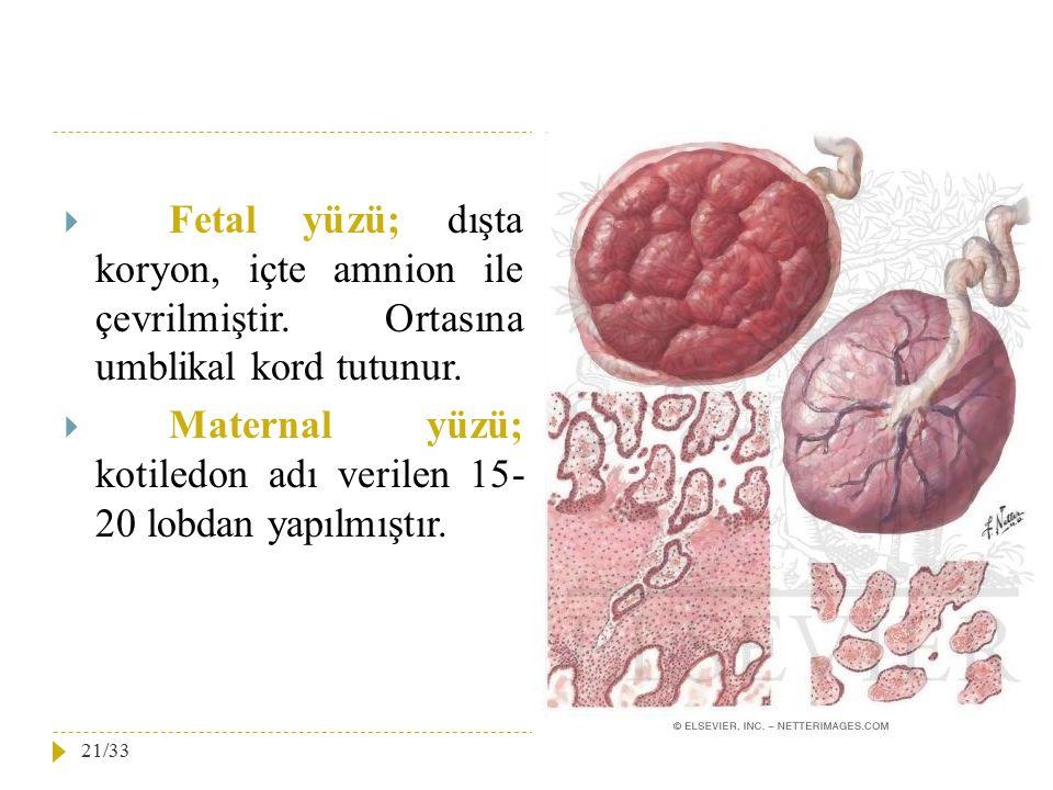Fetal yüzü; dışta koryon, içte amnion ile çevrilmiştir