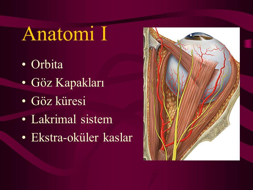 Anatomi I Orbita Göz Kapakları Göz küresi Lakrimal sistem