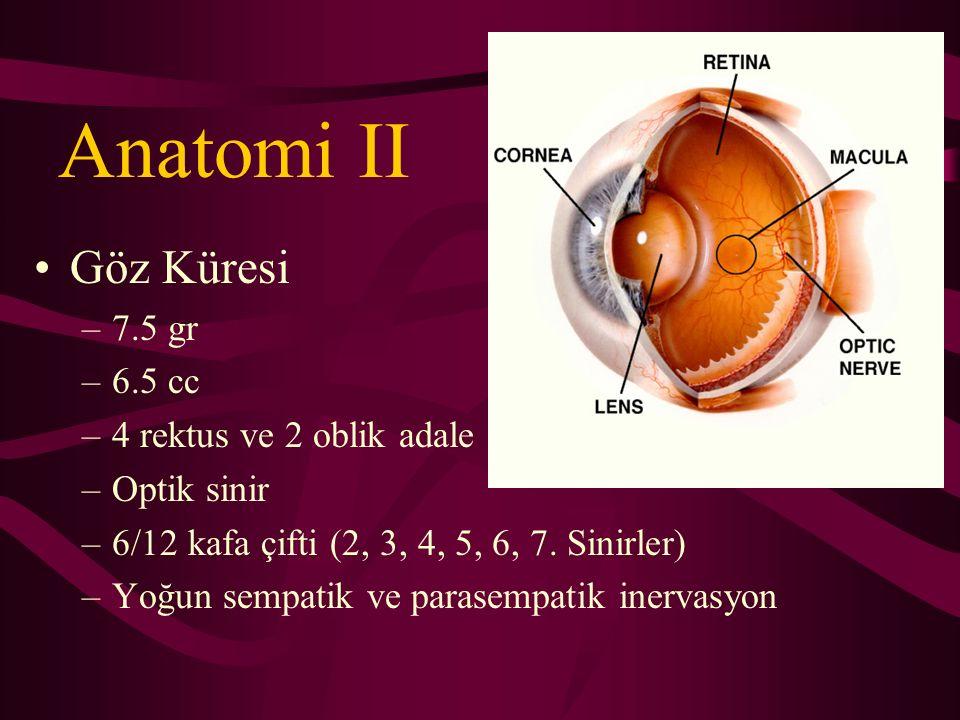 Anatomi II Göz Küresi 7.5 gr 6.5 cc 4 rektus ve 2 oblik adale