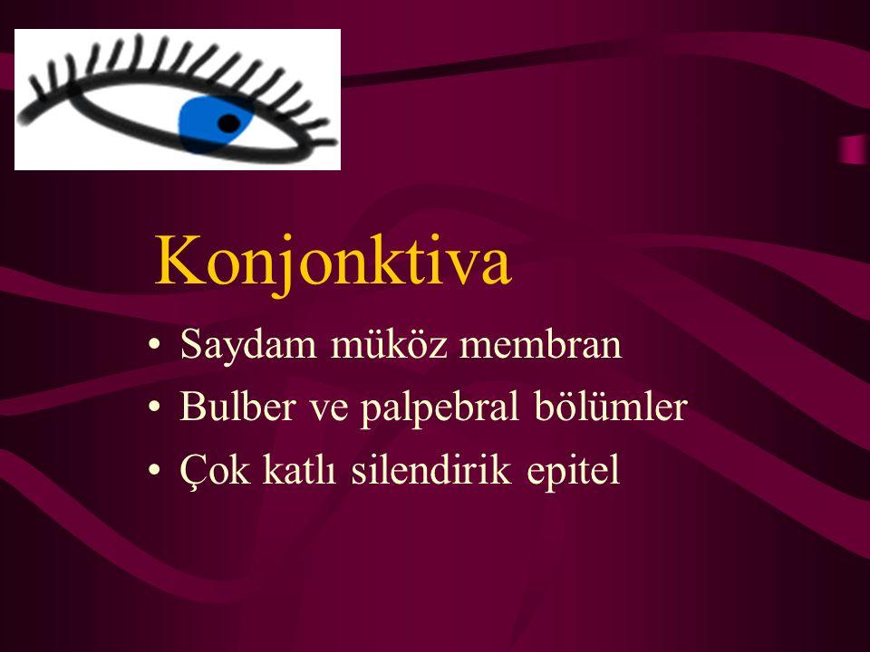 Konjonktiva Saydam müköz membran Bulber ve palpebral bölümler