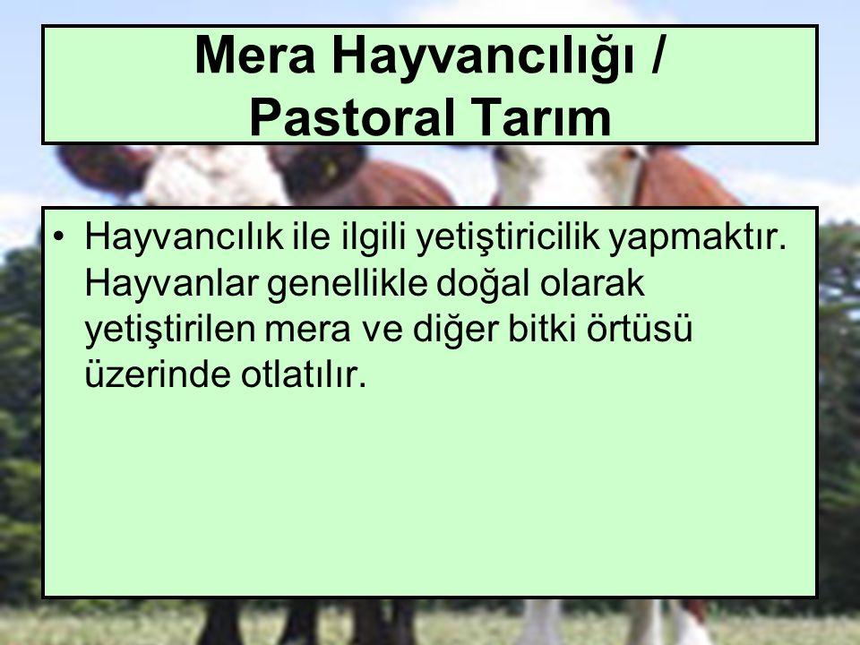 Mera Hayvancılığı / Pastoral Tarım
