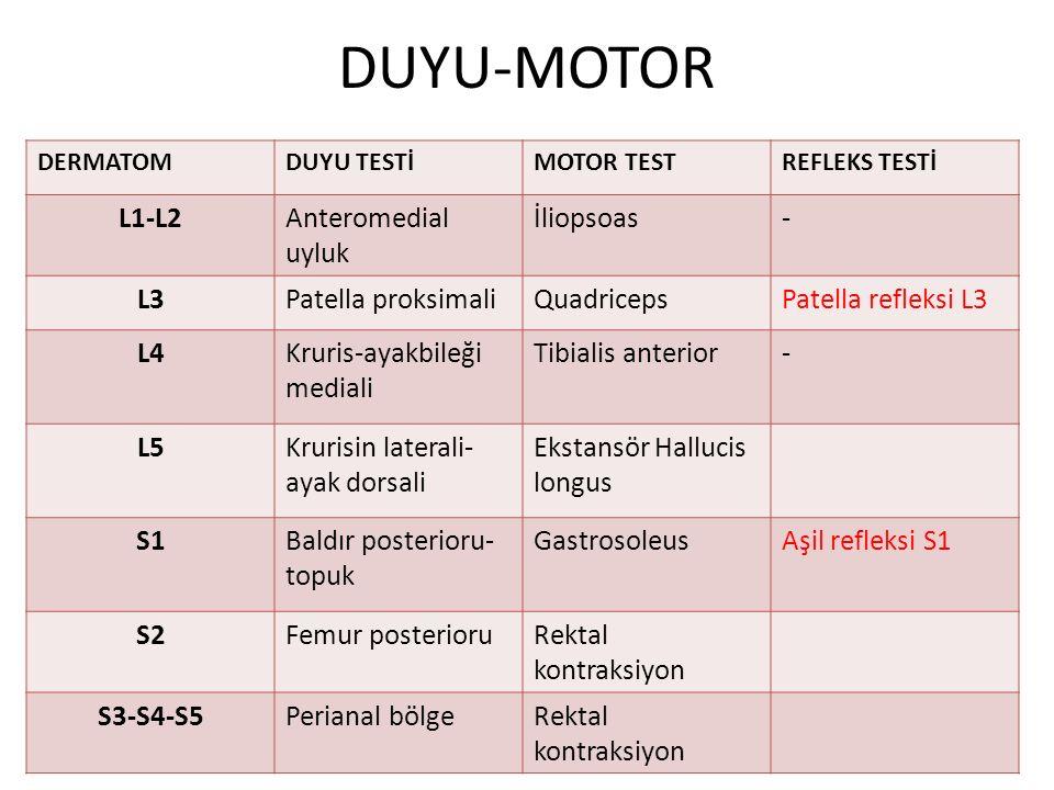DUYU-MOTOR L1-L2 Anteromedial uyluk İliopsoas - L3 Patella proksimali
