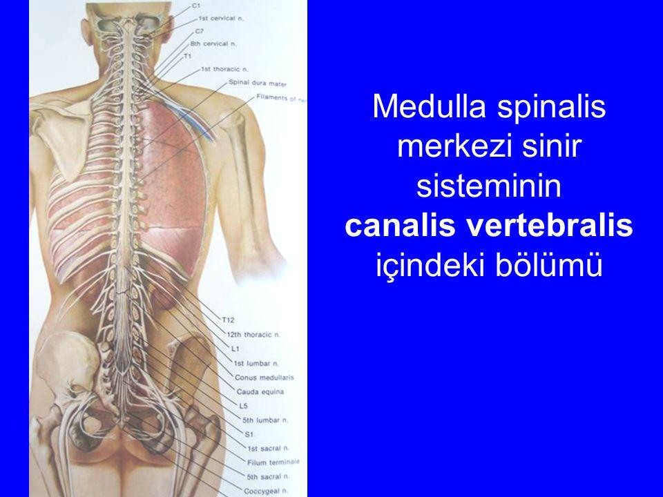 merkezi sinir sisteminin