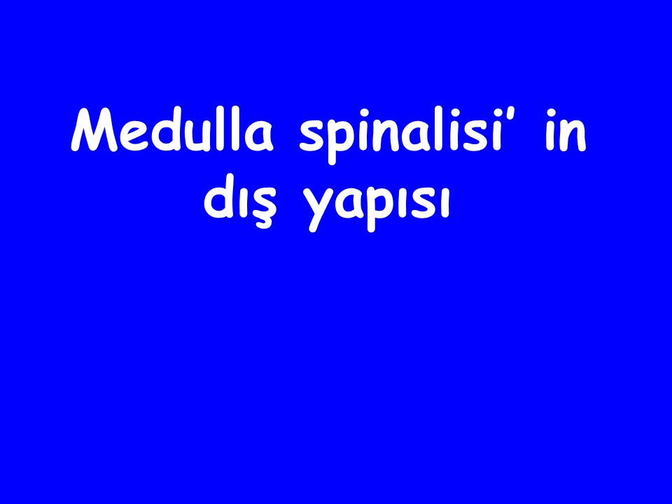 Medulla spinalisi' in dış yapısı