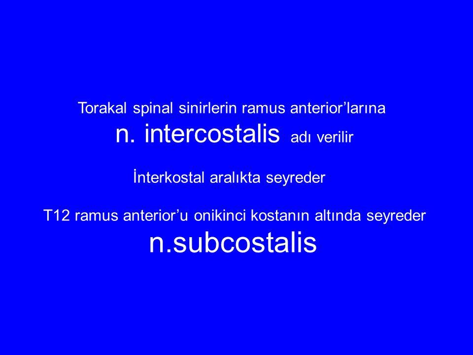n.subcostalis n. intercostalis adı verilir