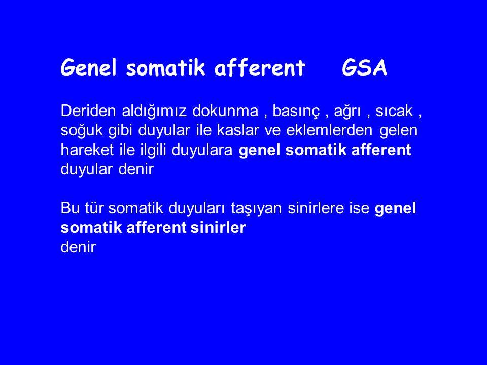 Genel somatik afferent GSA