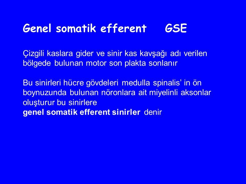 Genel somatik efferent GSE