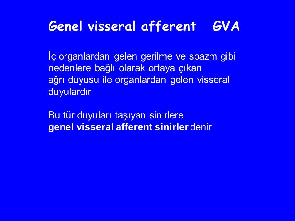 Genel visseral afferent GVA