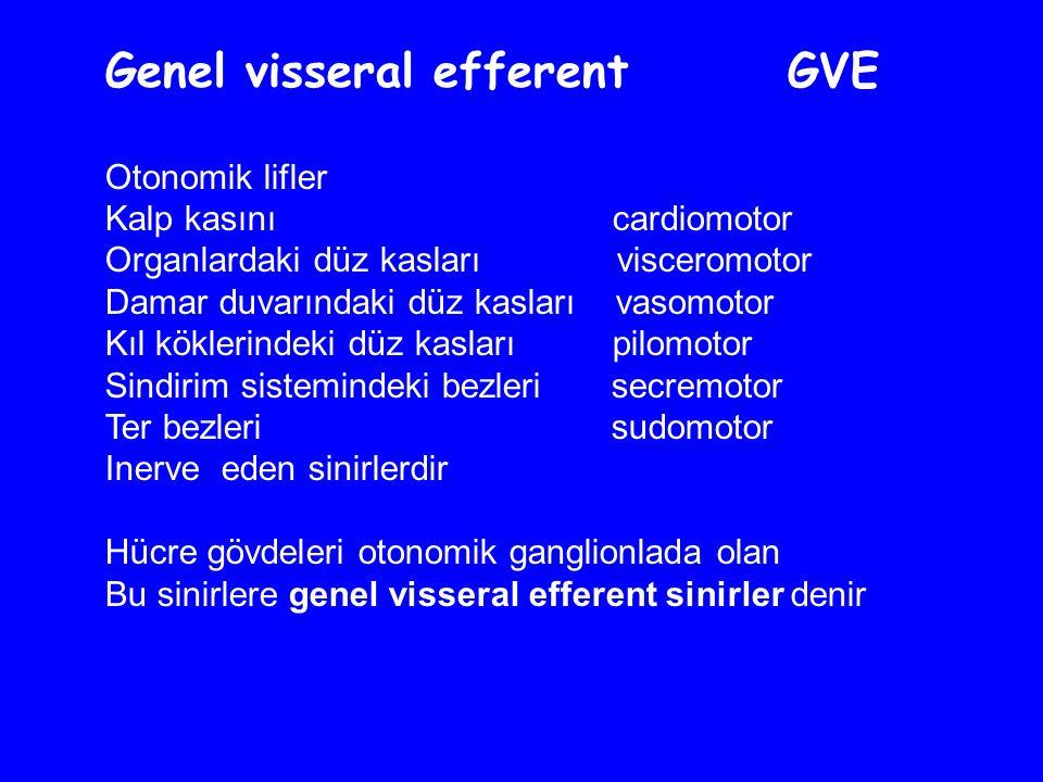 Genel visseral efferent GVE