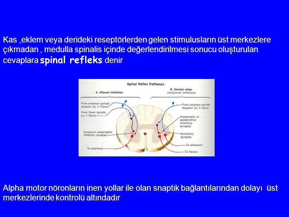 Kas ,eklem veya derideki reseptörlerden gelen stimulusların üst merkezlere