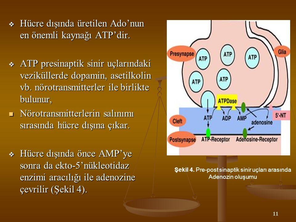 Şekil 4. Pre-post sinaptik sinir uçları arasında Adenozin oluşumu