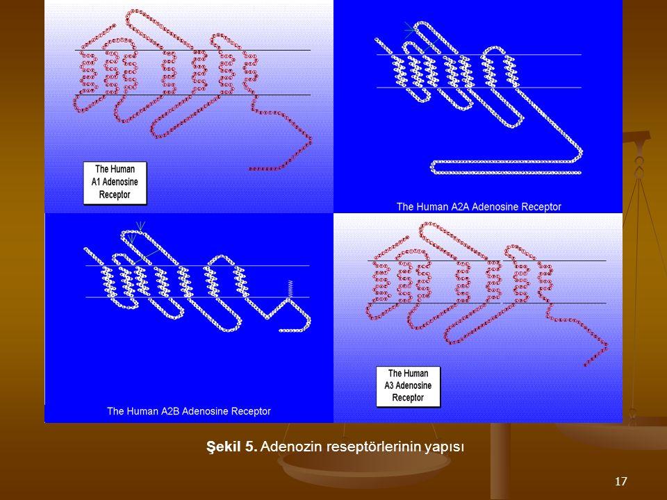 Şekil 5. Adenozin reseptörlerinin yapısı