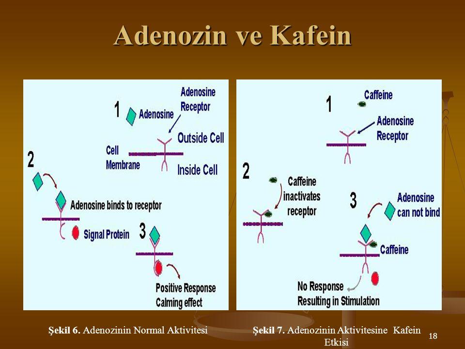 Adenozin ve Kafein Şekil 6. Adenozinin Normal Aktivitesi
