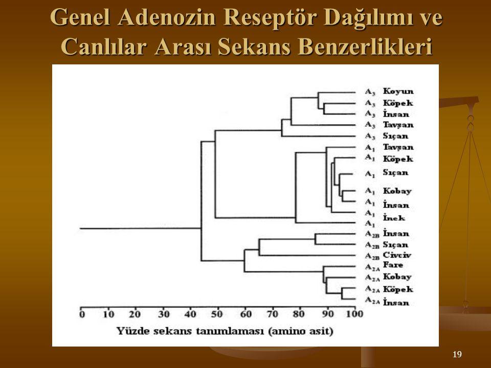 Genel Adenozin Reseptör Dağılımı ve Canlılar Arası Sekans Benzerlikleri