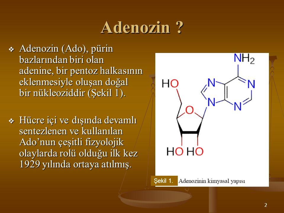 Adenozin Adenozin (Ado), pürin bazlarından biri olan adenine, bir pentoz halkasının eklenmesiyle oluşan doğal bir nükleoziddir (Şekil 1).
