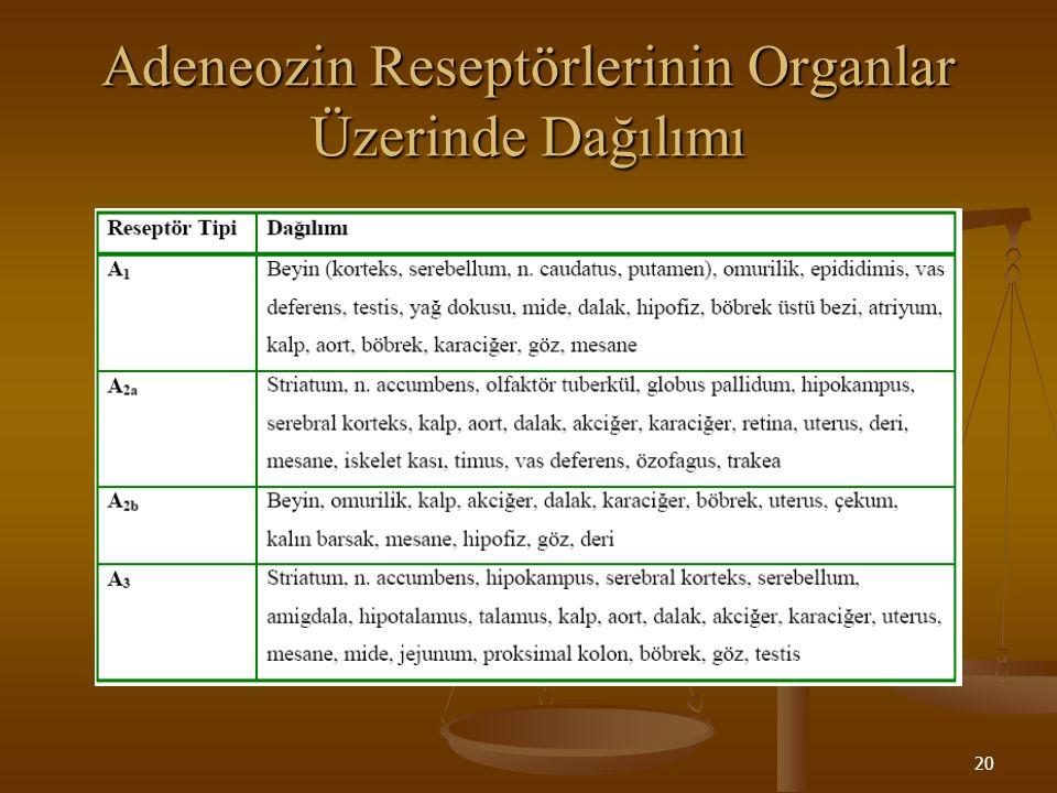 Adeneozin Reseptörlerinin Organlar Üzerinde Dağılımı