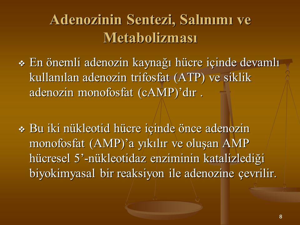 Adenozinin Sentezi, Salınımı ve Metabolizması