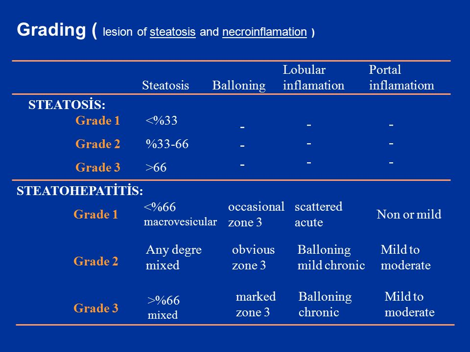 Grading ( lesion of steatosis and necroinflamation )
