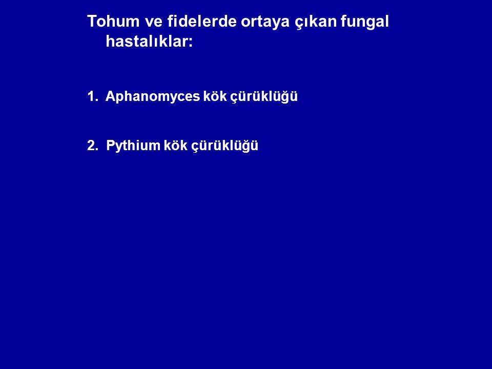 Tohum ve fidelerde ortaya çıkan fungal hastalıklar: