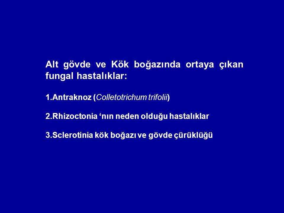Alt gövde ve Kök boğazında ortaya çıkan fungal hastalıklar: