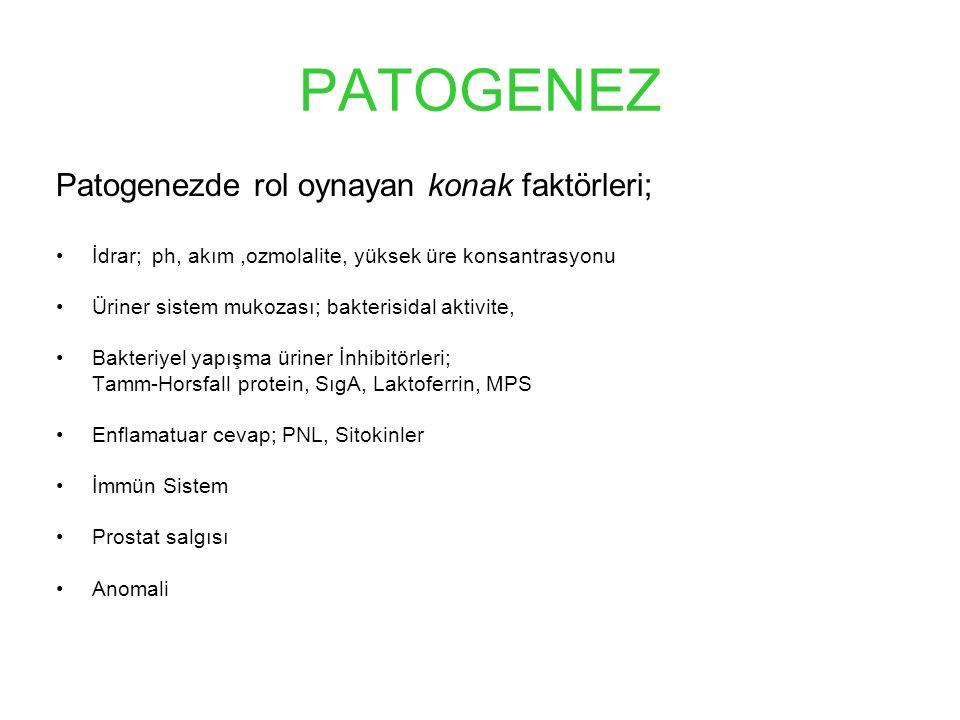 PATOGENEZ Patogenezde rol oynayan konak faktörleri;