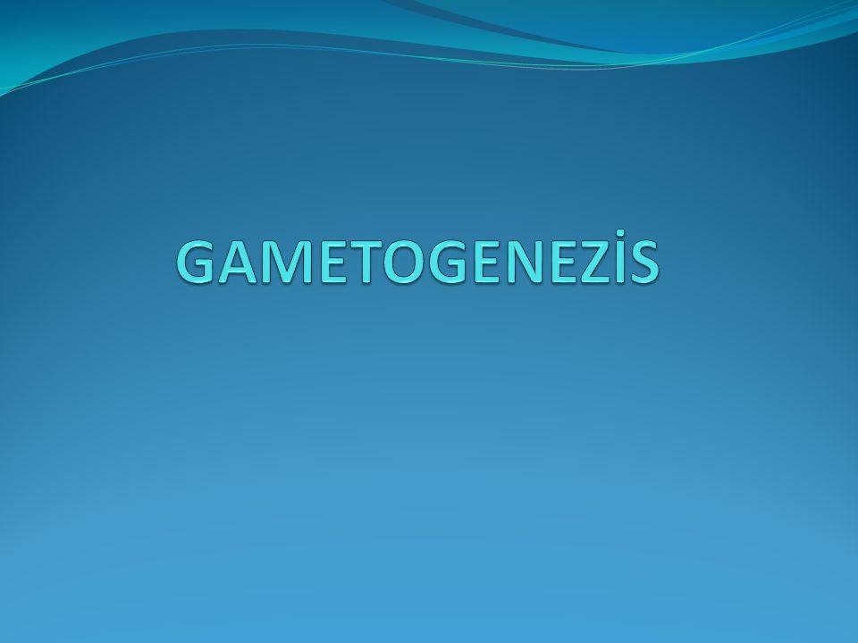 GAMETOGENEZİS