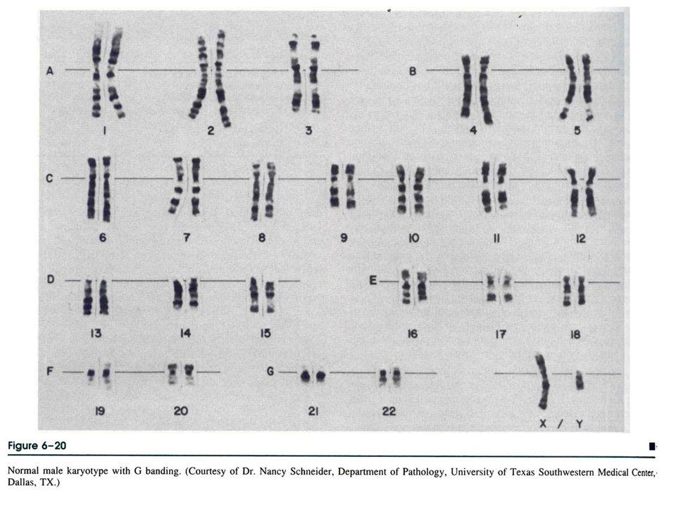 genetik hastalıklar 2006