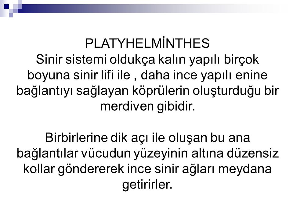 PLATYHELMİNTHES