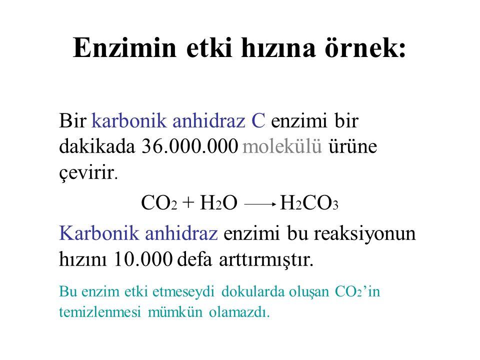 Enzimin etki hızına örnek: