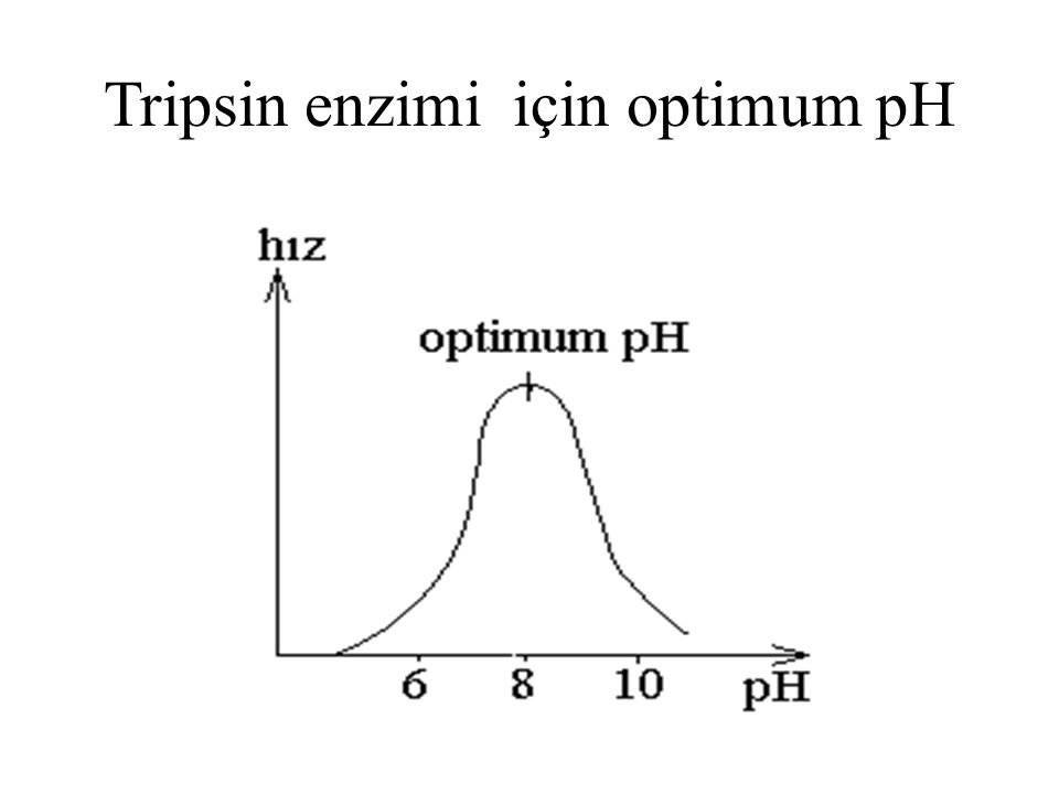 Tripsin enzimi için optimum pH
