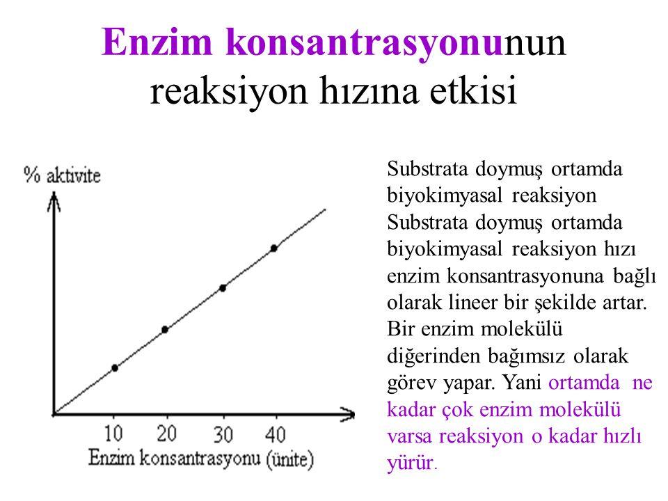 Enzim konsantrasyonunun reaksiyon hızına etkisi