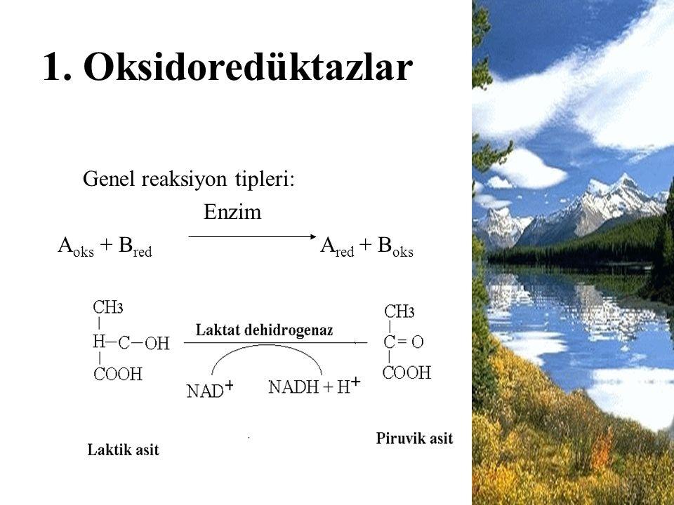 1. Oksidoredüktazlar Genel reaksiyon tipleri: Enzim