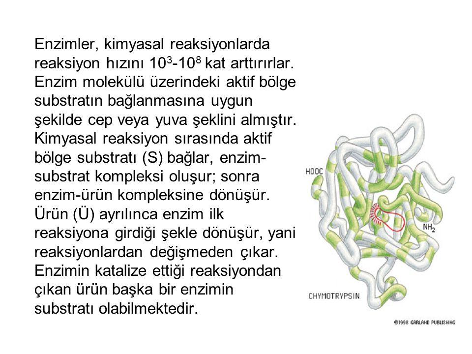 Enzimler, kimyasal reaksiyonlarda reaksiyon hızını 103-108 kat arttırırlar.