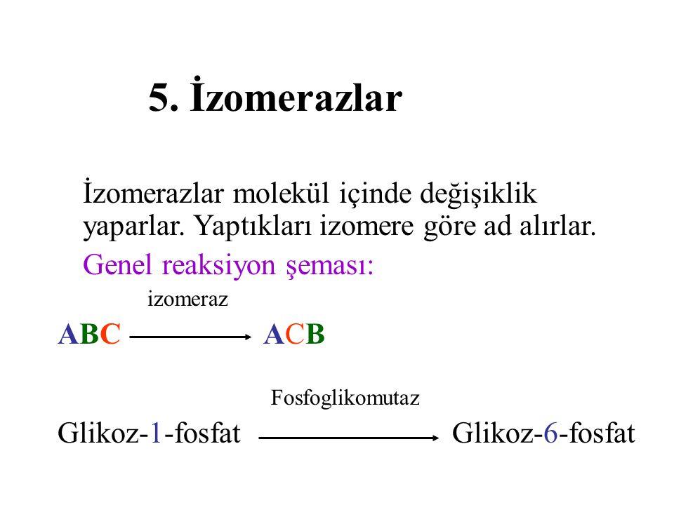 5. İzomerazlar İzomerazlar molekül içinde değişiklik yaparlar. Yaptıkları izomere göre ad alırlar. Genel reaksiyon şeması: