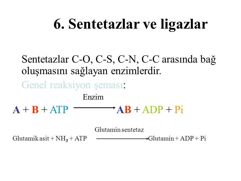 6. Sentetazlar ve ligazlar