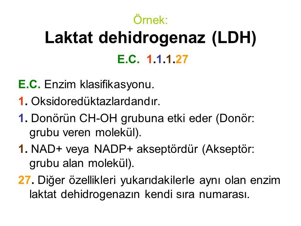 Örnek: Laktat dehidrogenaz (LDH) E.C. 1.1.1.27