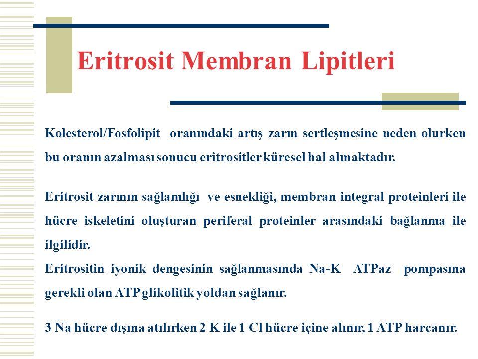 Eritrosit Membran Lipitleri